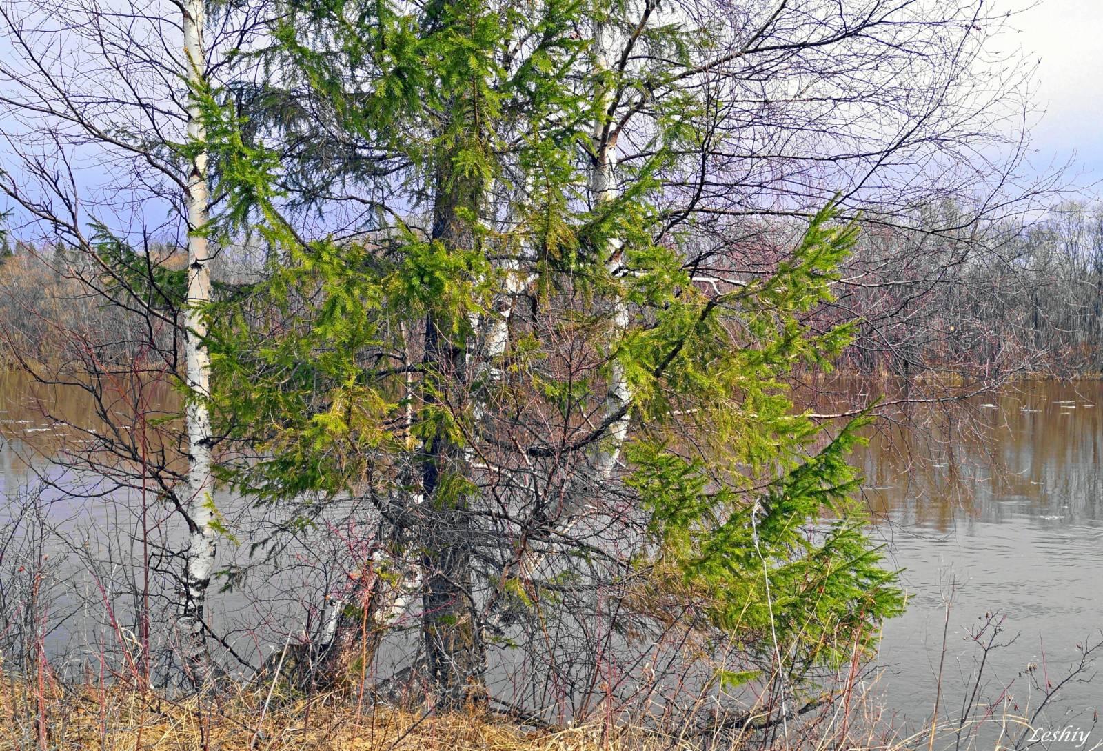Лес затопленный весной